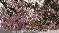Милувалися цвітінням перших квітів львів'яни у Вербну неділю