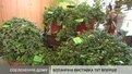 Еколого-натуралістичний центр допоможе львів'янам озеленити помешкання