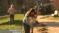 Навести лад у парках Львова закликають дерева