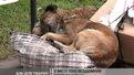 Міська влада виділила гроші на новий притулок для тварин