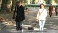 У Львові невідомі отруюють бездомних собак