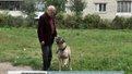 В Україні посилять контроль над домашніми тваринами