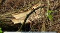 """У парку-заповіднику """"Знесіння"""" незаконно вирубують дерева"""