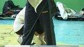 З титул чемпіонки з фехтування змагалось дві львів'янки