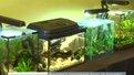 У еколого-натуралістичному центрі показують нано-рибок