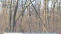 """На лісопідприємствах """"Галсільлісу"""" не можуть провести саночистку"""