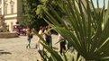 Посидіти під пальмою можна і у Львові
