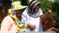 Сьогодні в Україні святкують День пасічника