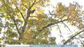 Німці вчать львів'ян, як правильно обрізати дерева