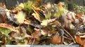 Львів'яни палять опале листя, порушуючи закон