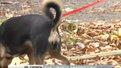 У сквері на Виговського хулігани позривали таблички з інформацією щодо вигулу собак