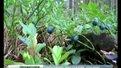 Львівським професорам пропонують заробляти на ягодах у Швеції
