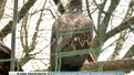 Львівський клуб орнітологів вимагає передати червонокнижних птахів заповідникам