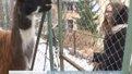 """Львів'ян просять допомогти прогодувати тварин, яких врятували із """"ферми смерті"""""""