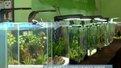 У Львові відкрили п'яту виставку міні-акваріумів