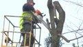 У львівському сквері Святого Юра спилюють дерева