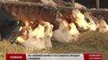 У Пустомитах облаштували ферму за данським зразком