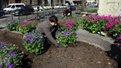 Центр Львова до Великодня вбрали у квіти