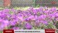 На Львівщині врожай городини через погодні умови запізниться на два тижні