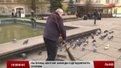 Щоб голубів у Львові поменшало, треба полагодити піддашшя будинків, - орнітолог