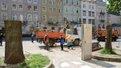 На площі Ринок біля Ратуші зрізали аварійні каштани