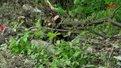 У Замарстинівському парку у Львові невідомі зрубали понад 50 дерев