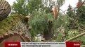 Негода у Львові найчастіше валить дерева у Франківському районі