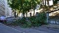 У Львові на школярів після урочистостей мало не впало аварійне дерево