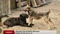 Собаки у львівському притулку «Милосердя» можуть залишитись без їжі