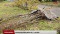 Цієї осені у Львові висадять понад дві тисячі молодих дерев