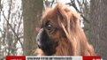 У Львові буде мережа майданчиків для собак