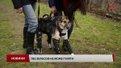 У Львові собака, якій люди відрубали лапи, вчиться ходити на протезах