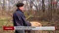 На Золочівщині перевіряють законність вирубки лісу