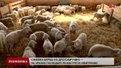 Сімейна ферма на Львівщині працює за європейською моделлю