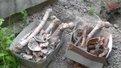 У центрі Львова розкопали людські кістки під час прокладання кабелю