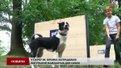 У львівському парку собаки тестують тренувально-вигульний майданчик