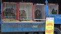 У Львові заборонили пересувні цирки