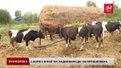 На Львівщині запрацювала молочна сімейна ферма