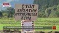 Селяни на Львівщині не допускають ветеринарів до свиней, які можуть бути заражені чумою