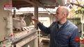 Боєць АТО після війни вирощує кроликів