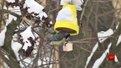Екологи закликають львів'ян до флешмобу задля порятунку птахів
