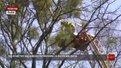 У Стрийському парку омела уразила майже третину дерев
