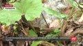 Життю вагітної жінки, яку вкусила змія на Сколівщині, загрози немає