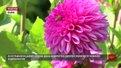 У львівському ботанічному саду відбувся останній у сезоні День відкритих дверей
