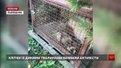 Поблизу Львова викрили станцію притравки диких тварин