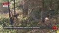 Екологи розпочали перевірку Дністрянського лісництва через незаконну рубку дерев