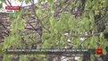 ЄБРР допоможе Львову вирішити екологічні проблеми у місті