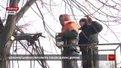 Експерти пояснили львів'янам, як домогтися зрізки аварійного дерева