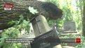 Буревій пошкодив на Личаківському кладовищі сімдесят пам'ятників