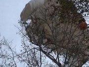 На Львівщині затримали парашутиста, ймовірно, диверсанта
